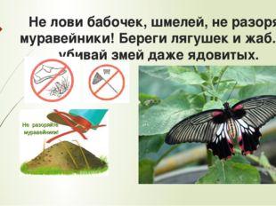 Не лови бабочек, шмелей, не разоряй муравейники! Береги лягушек и жаб. Не уби