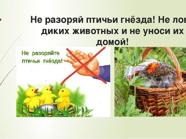 Не разоряй птичьи гнёзда! Не лови диких животных и не уноси их домой!