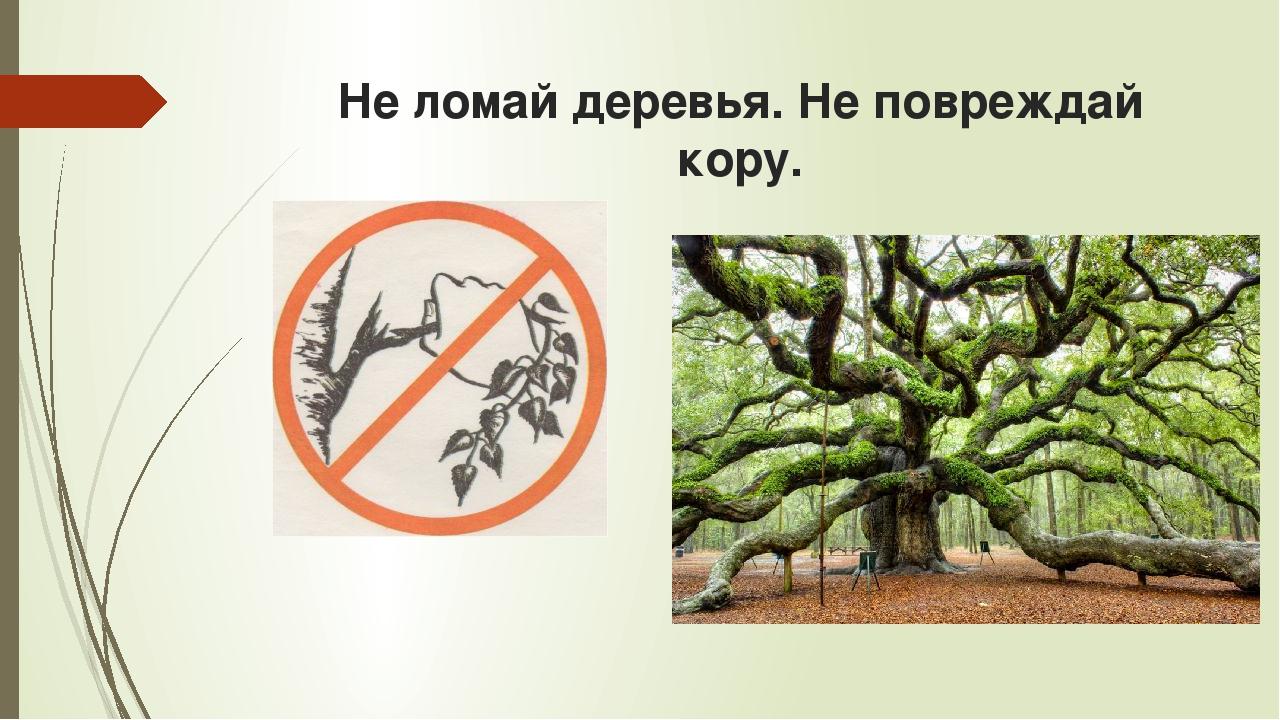 Не ломай деревья. Не повреждай кору.