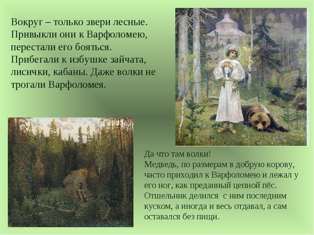 Вокруг – только звери лесные. Привыкли они к Варфоломею, перестали его боятьс...