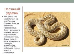 Песчаный удавчик Эта небольшая змея обитает на юге России в Средней Азии и в