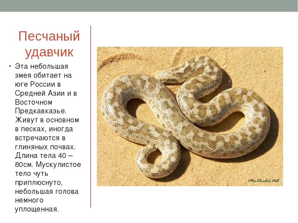 Песчаный удавчик Эта небольшая змея обитает на юге России в Средней Азии и в...