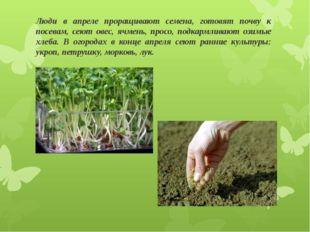 Люди в апреле проращивают семена, готовят почву к посевам, сеют овес, ячмень,