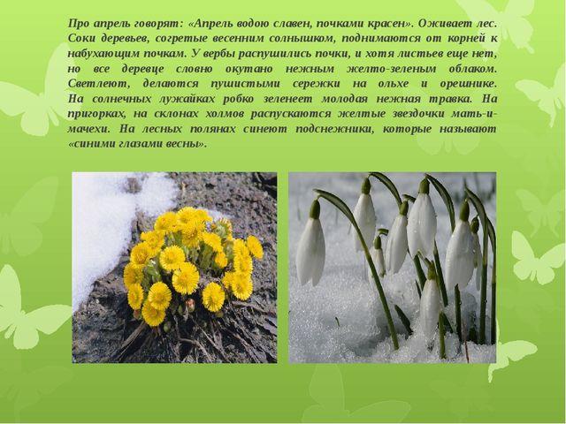 Про апрель говорят: «Апрель водою славен, почками красен». Оживает лес. Соки...