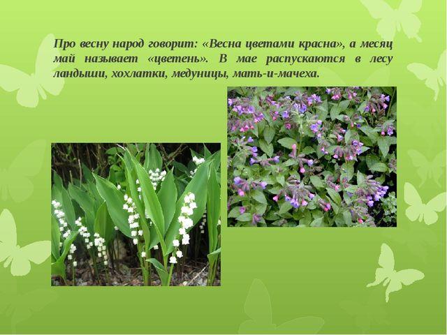 Про весну народ говорит: «Весна цветами красна», а месяц май называет «цветен...