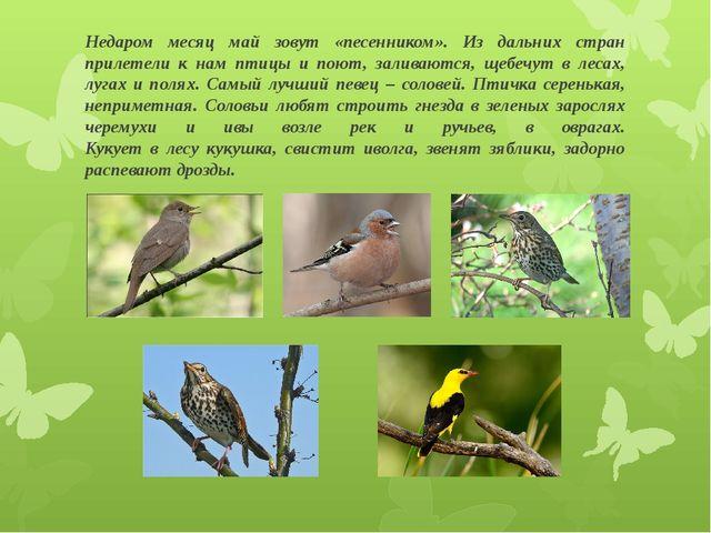 Недаром месяц май зовут «песенником». Из дальних стран прилетели к нам птицы...