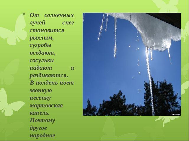От солнечных лучей снег становится рыхлым, сугробы оседают, сосульки падают и...