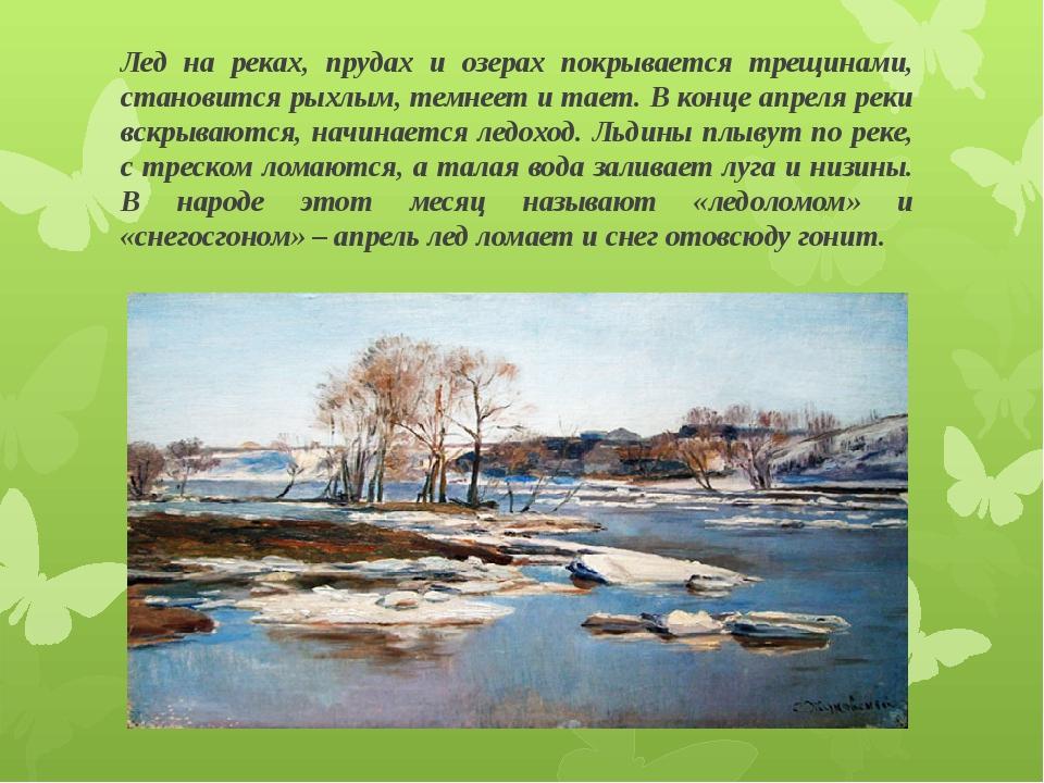 Лед на реках, прудах и озерах покрывается трещинами, становится рыхлым, темне...