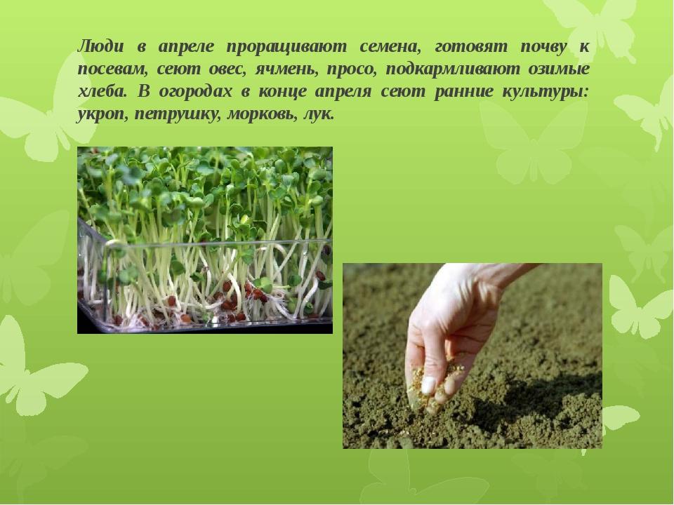 Люди в апреле проращивают семена, готовят почву к посевам, сеют овес, ячмень,...