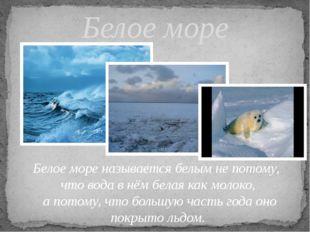 Белое море Белое море называется белым не потому, что вода в нём белая как мо