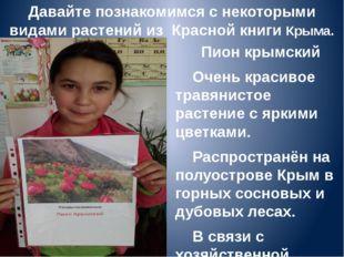 Давайте познакомимся с некоторыми видами растений из Красной книги Крыма. Пио