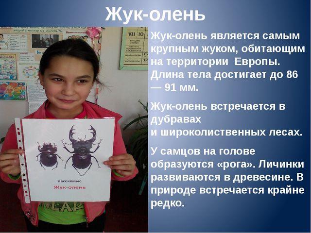 Жук-олень Жук-олень является самым крупным жуком, обитающим на территории Ев...