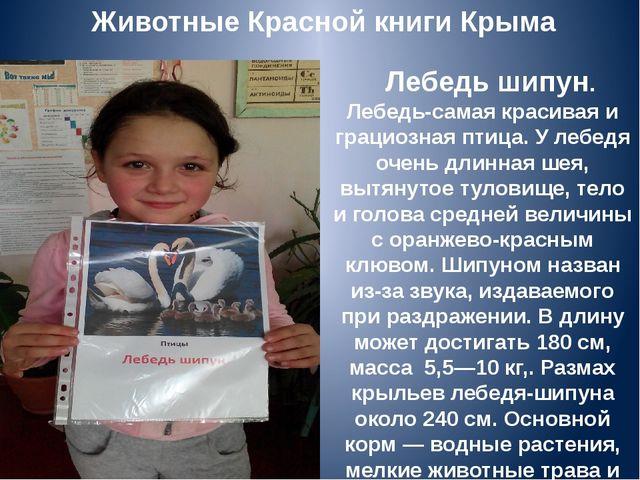 Животные Красной книги Крыма Лебедь шипун. Лебедь-самая красивая и грациозна...