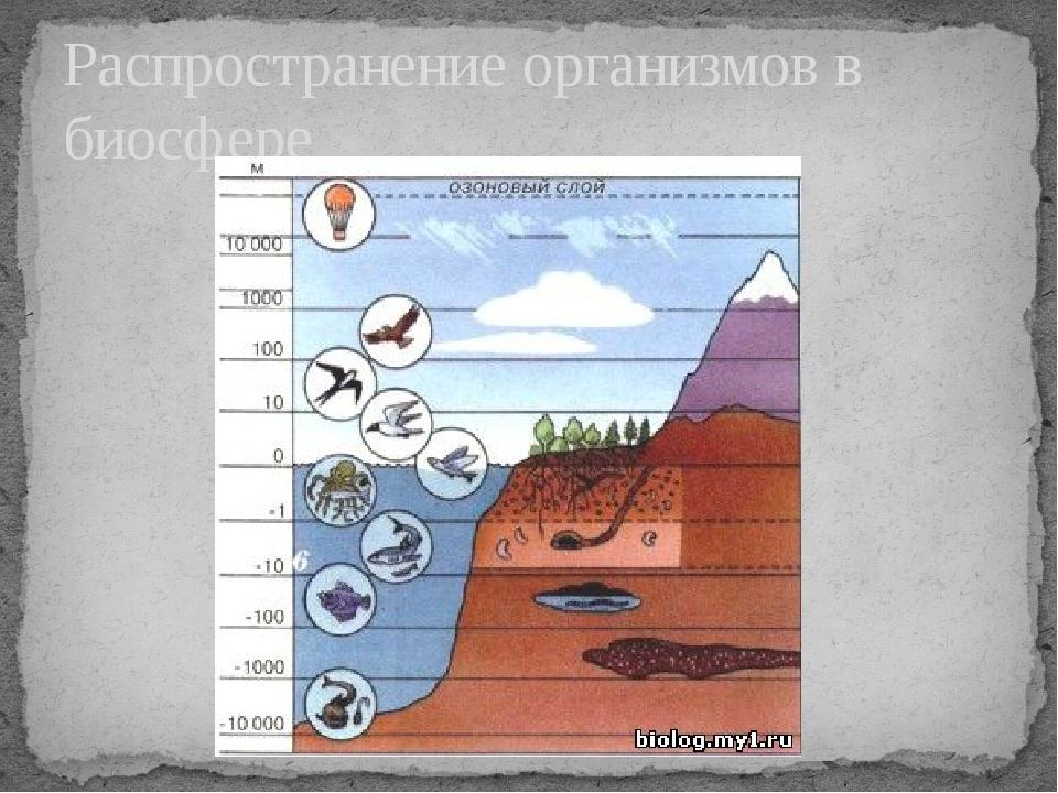 Распространение организмов в биосфере