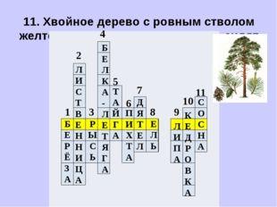 11. Хвойное дерево с ровным стволом желтого цвета. Хвоинки длинные, сидят пар