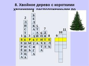 8. Хвойное дерево с короткими хвоинками, расположенными по одиночке.