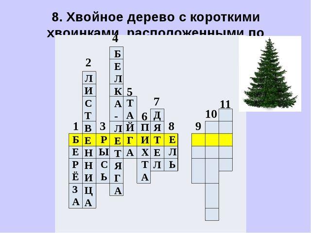 8. Хвойное дерево с короткими хвоинками, расположенными по одиночке.    ...