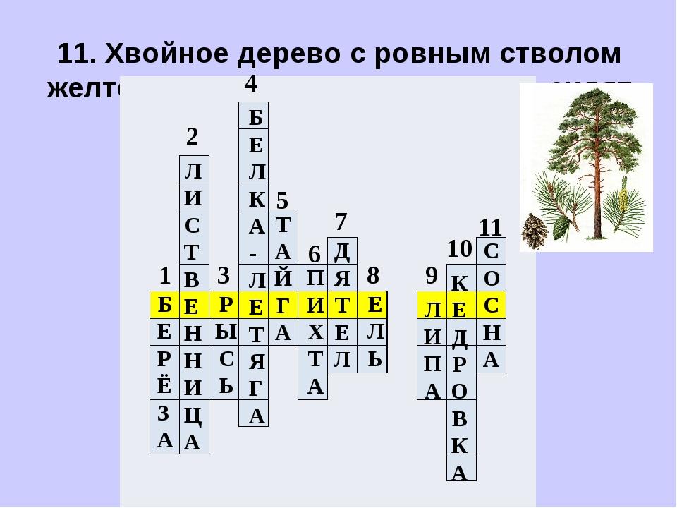 11. Хвойное дерево с ровным стволом желтого цвета. Хвоинки длинные, сидят пар...