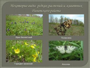 Ирис безлистный Горицвет весенний Поликсена Аполлон