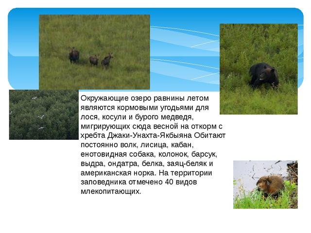 Окружающие озеро равнины летом являются кормовыми угодьями для лося, косули и...