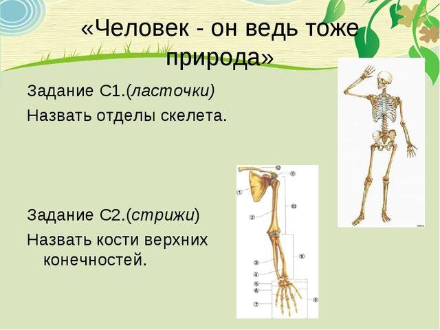 «Человек - он ведь тоже природа» Задание С1.(ласточки) Назвать отделы скелета...