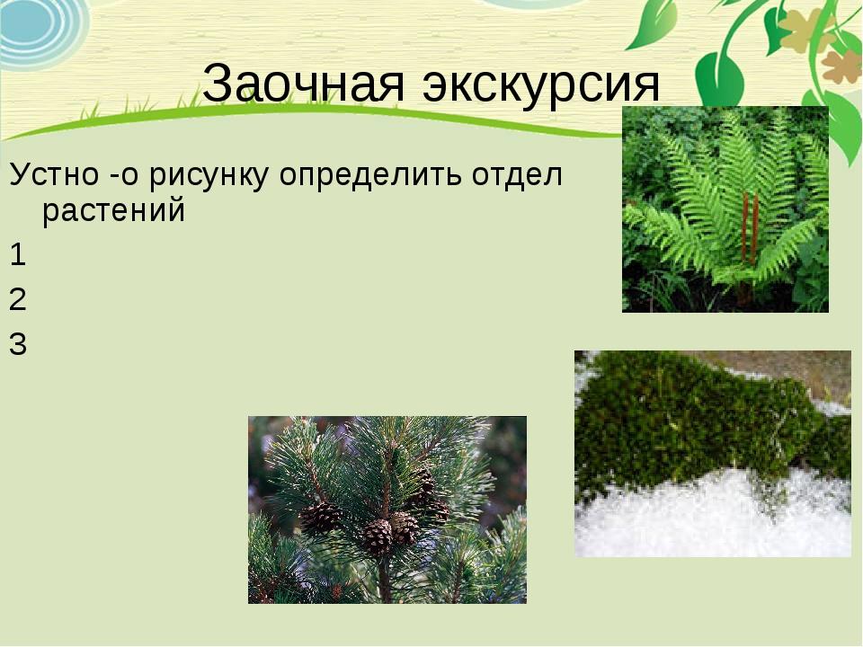 Заочная экскурсия Устно -о рисунку определить отдел растений 1 2 3