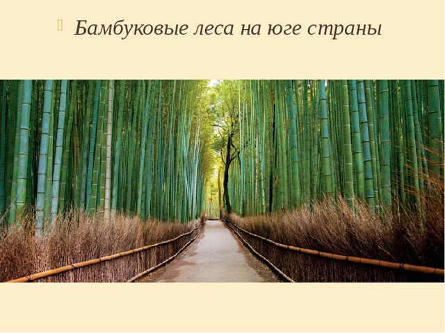 Бамбуковые леса на юге страны