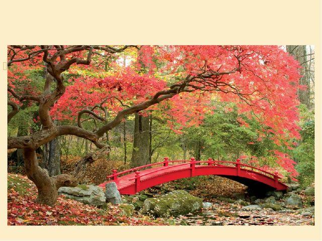 Японский красный клен — еще один символ страны