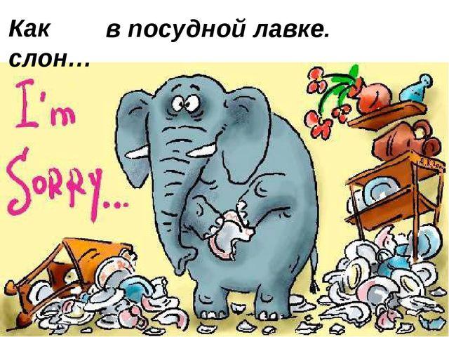 Как слон… в посудной лавке.