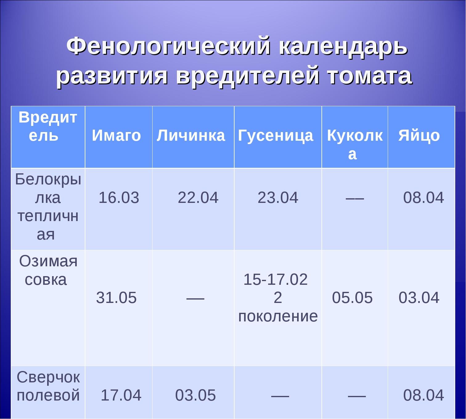 Фенологический календарь развития вредителей томата Вредитель  Имаго  Личин...