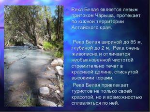 Река Белая является левым притоком Чарыша, протекает по южной территории Алта