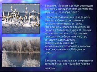"""Заказник """"Лебединый"""" был учрежден решением крайисполкома Алтайского края от 2"""