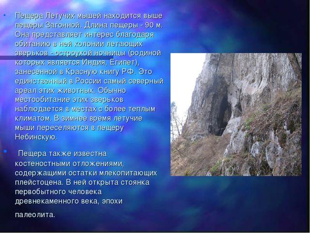 Пещера Летучих мышей находится выше пещеры Загонной. Длина пещеры - 90 м. Она...