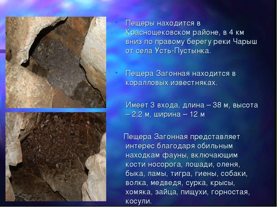 Пещеры находится в Краснощековском районе, в 4 км вниз по правому берегу реки...