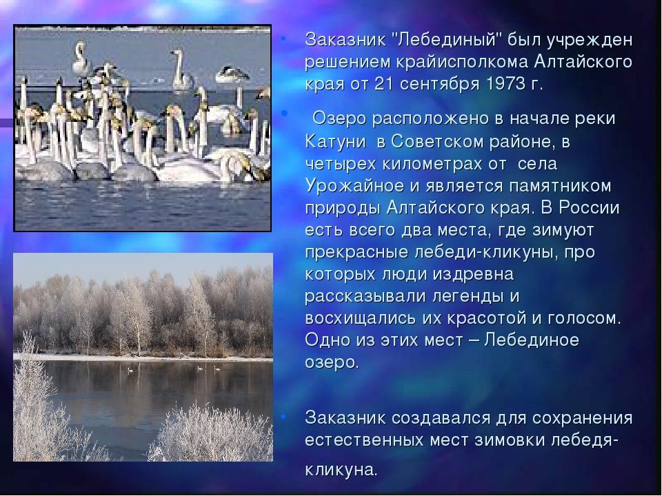 """Заказник """"Лебединый"""" был учрежден решением крайисполкома Алтайского края от 2..."""