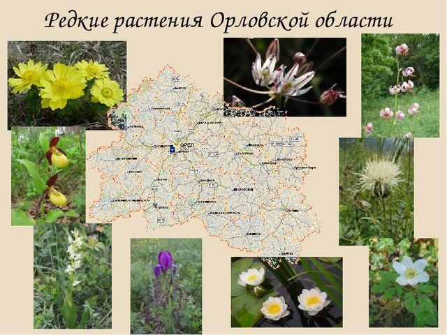 Редкие растения Орловской области