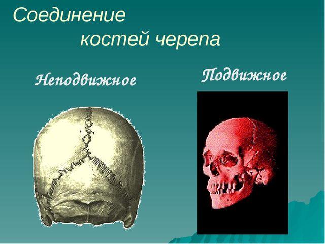 Соединение костей черепа Неподвижное Подвижное