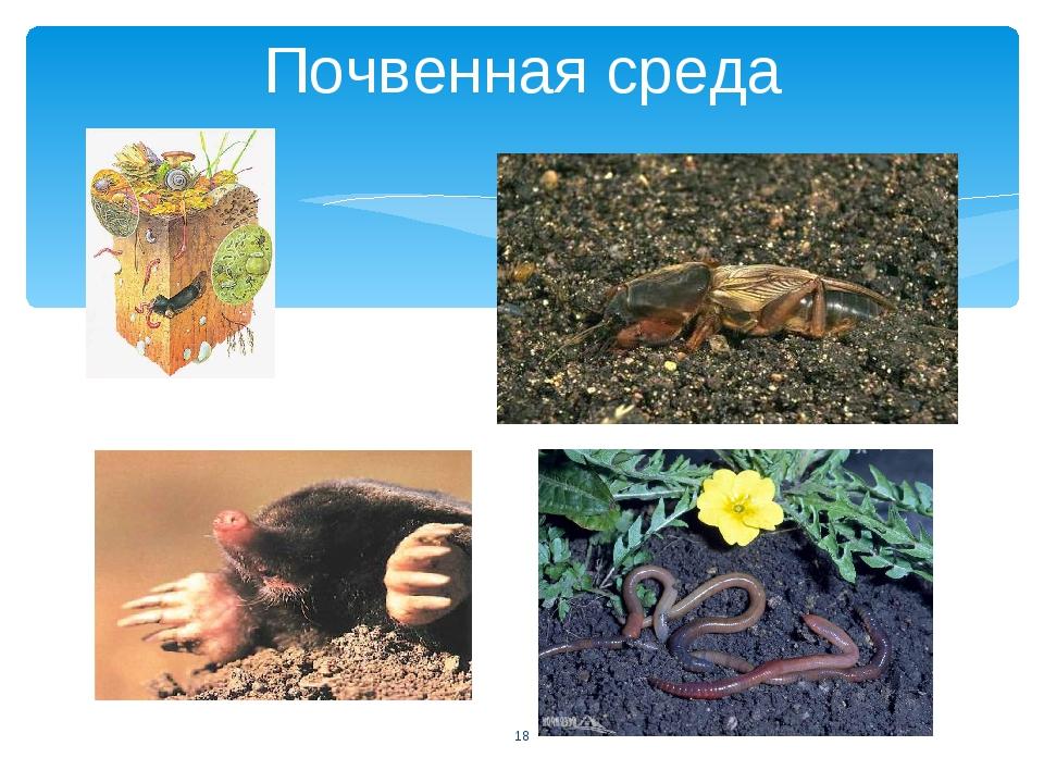 Почвенная среда *