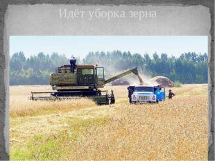 Идёт уборка зерна