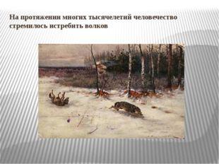 На протяжении многих тысячелетий человечество стремилось истребить волков