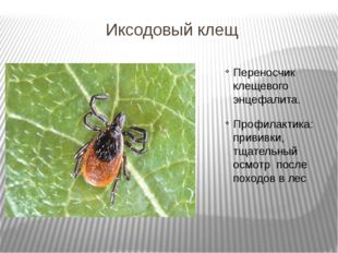 Иксодовый клещ Переносчик клещевого энцефалита. Профилактика: прививки, тщате