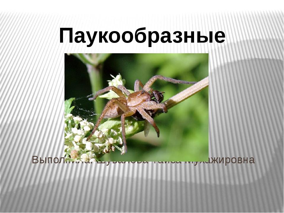 Выполнила: Шувалова Таиса Мухажировна Паукообразные