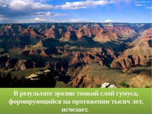 В результате эрозии тонкий слой гумуса, формирующийся на протяжении тысяч лет
