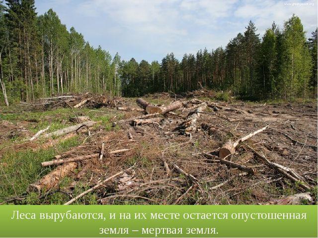 Леса вырубаются, и на их месте остается опустошенная земля – мертвая земля. w...