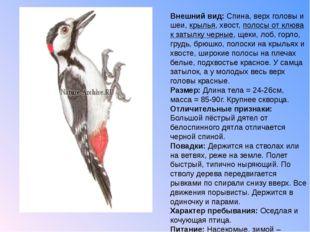 Внешний вид: Спина, верх головы и шеи, крылья, хвост, полосы от клюва к затыл