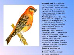 Внешний вид: Все оперение темно-красное; крылья и хвост темные. Самки тускло