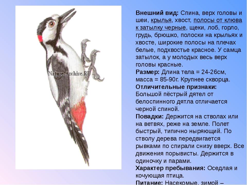 Внешний вид: Спина, верх головы и шеи, крылья, хвост, полосы от клюва к затыл...
