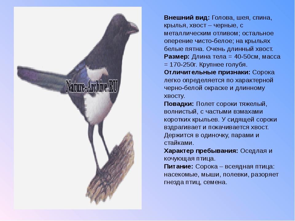Внешний вид: Голова, шея, спина, крылья, хвост – черные, с металлическим отли...