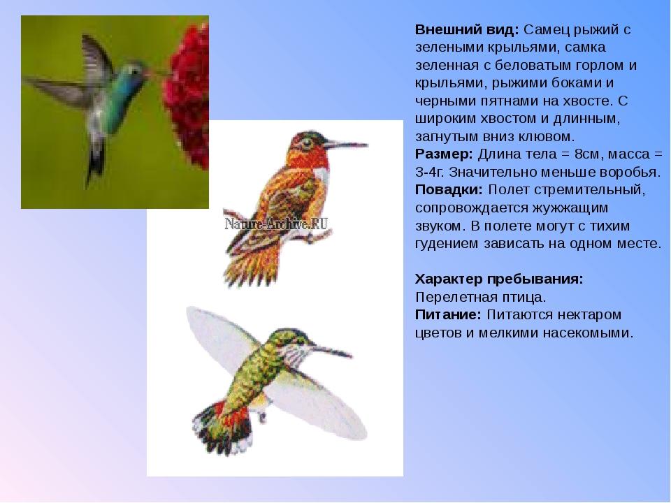 Внешний вид: Самец рыжий с зелеными крыльями, самка зеленная с беловатым горл...