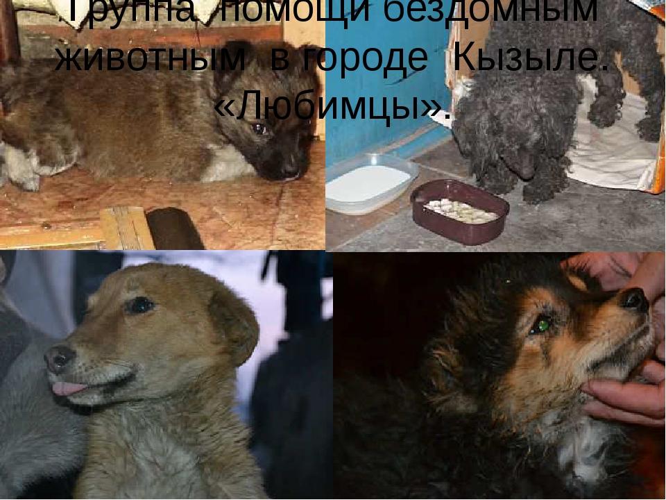 Группа помощи бездомным животным в городе Кызыле. «Любимцы».